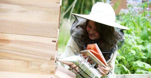 Ngôn Ngữ Riêng Của Loài Ong