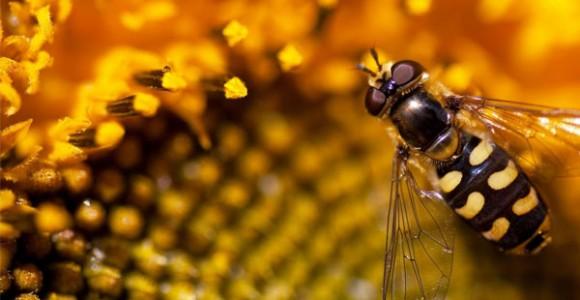 Một Số Khả Năng Đặc Biệt Của Loài Ong