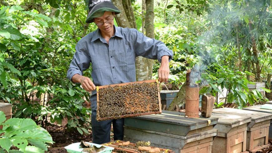 Mật ong nguyên chất tại TPHCM