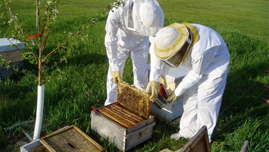 Các kỹ thuật trong nghề ong
